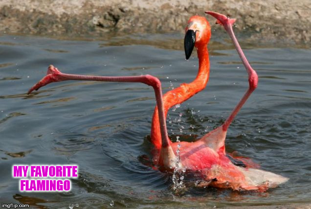 MY FAVORITE FLAMINGO | made w/ Imgflip meme maker