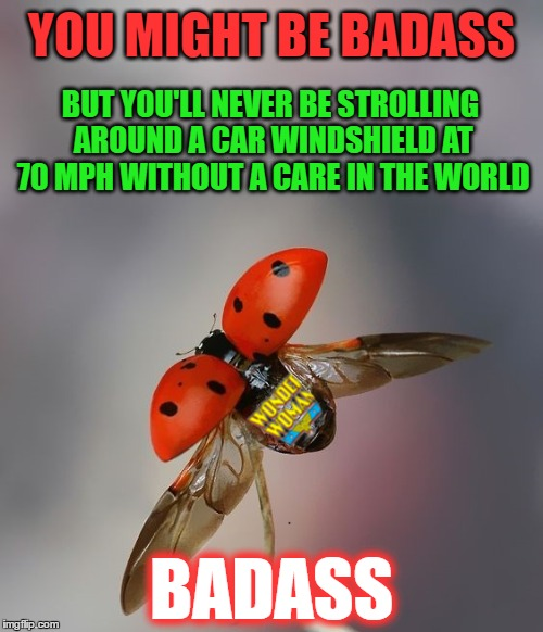 """Lady"" bug 