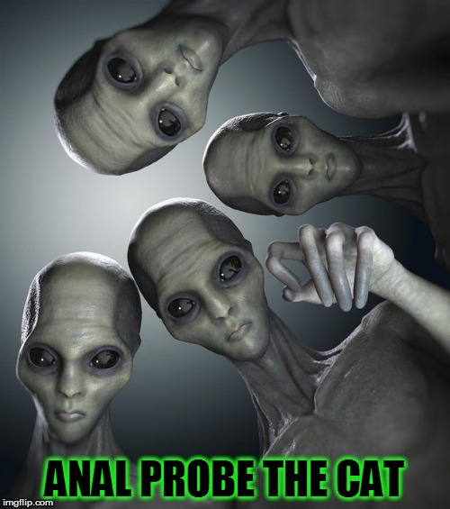 ANAL PROBE THE CAT | made w/ Imgflip meme maker