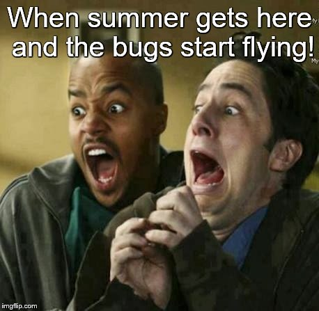 SUMMERTIME AND NIGHTIME | When summer gets here and the bugs start flying! | image tagged in first world problems,flying bugs | made w/ Imgflip meme maker