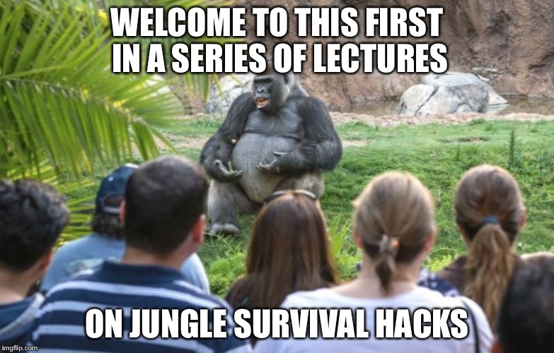 Ya gotta love those sociological credit requirements | WELCOME TO THIS FIRST IN A SERIES OF LECTURES ON JUNGLE SURVIVAL HACKS | image tagged in ted talk gorilla,college,memes | made w/ Imgflip meme maker