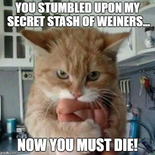 Cat With Dogs | YOU STUMBLED UPON MY SECRET STASH OF WEINERS... NOW YOU MUST DIE! | image tagged in cats,funny cats,animals,funny animals | made w/ Imgflip meme maker