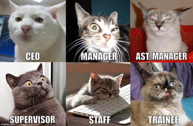 Funny Tuesday Work Meme : Image tagged in work funny funny animal cats cat funny memes imgflip