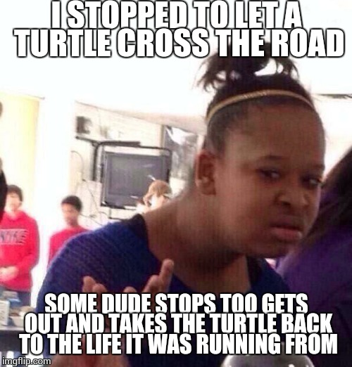 Life can be cruel, people who think they're healing the earth, crueler | I STOPPED TO LET A TURTLE CROSS THE ROAD SOME DUDE STOPS TOO GETS OUT AND TAKES THE TURTLE BACK TO THE LIFE IT WAS RUNNING FROM | image tagged in memes,black girl wat | made w/ Imgflip meme maker