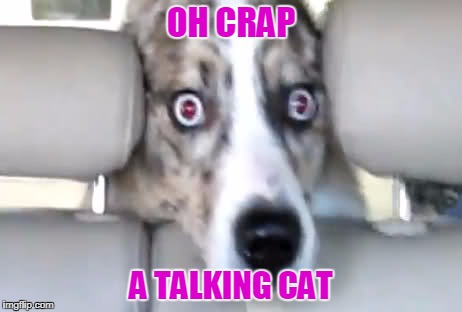 OH CRAP A TALKING CAT | made w/ Imgflip meme maker