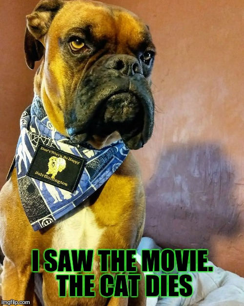 Grumpy Dog | I SAW THE MOVIE. THE CAT DIES | image tagged in grumpy dog | made w/ Imgflip meme maker