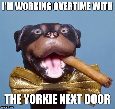 I'M WORKING OVERTIME WITH THE YORKIE NEXT DOOR | made w/ Imgflip meme maker