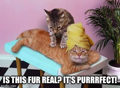 IS THIS FUR REAL? IT'S PURRRFECT! | made w/ Imgflip meme maker