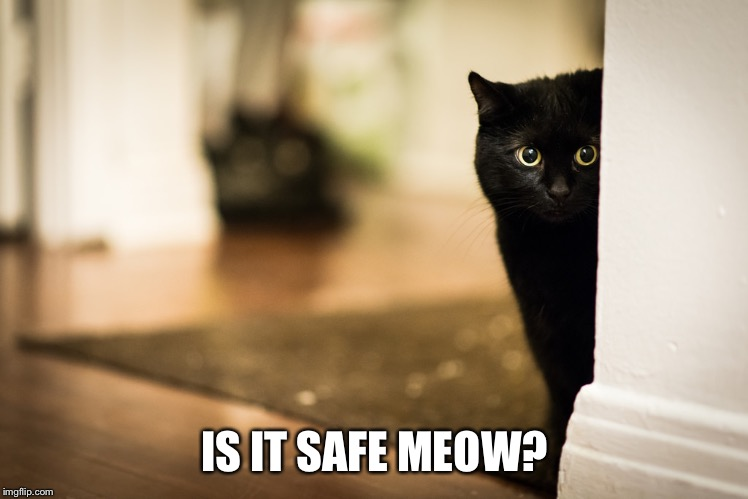 IS IT SAFE MEOW? | made w/ Imgflip meme maker