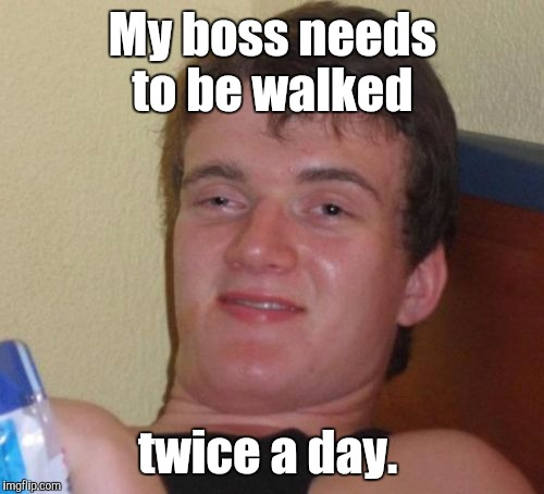 10 Guy Meme | My boss needs to be walked twice a day. | image tagged in memes,10 guy | made w/ Imgflip meme maker