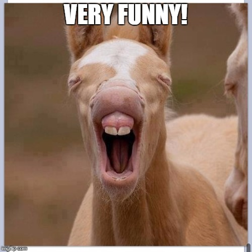 Foal | VERY FUNNY! | image tagged in foal | made w/ Imgflip meme maker