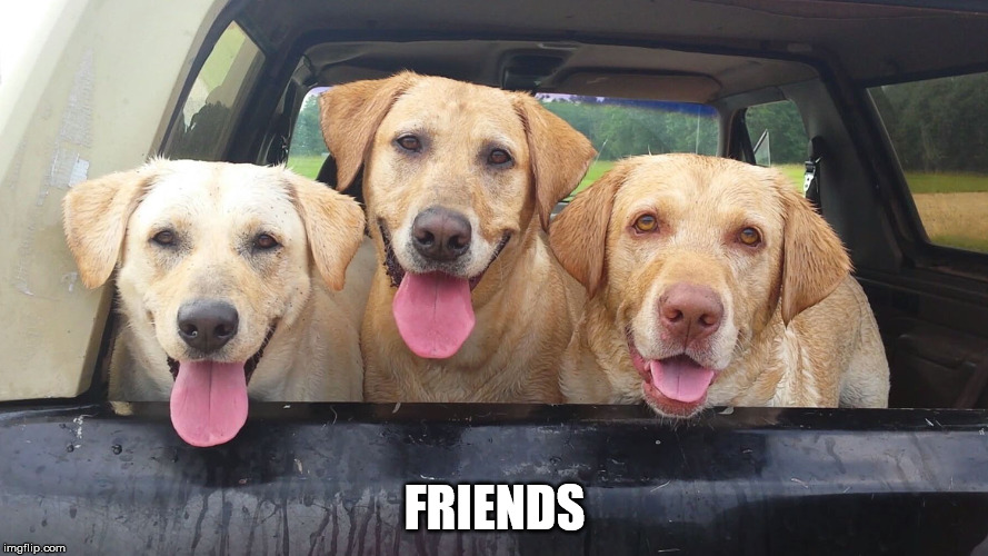 Fun with Labs | FRIENDS | image tagged in dogs | made w/ Imgflip meme maker