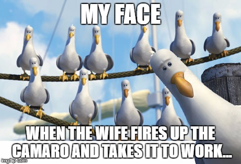 Wife And Camaro | MY FACE WHEN THE WIFE FIRES UP THE CAMARO AND TAKES IT TO WORK... | image tagged in wife,camaro,nemo seagulls mine | made w/ Imgflip meme maker