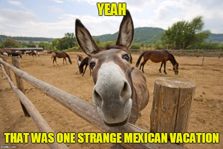 YEAH THAT WAS ONE STRANGE MEXICAN VACATION | made w/ Imgflip meme maker
