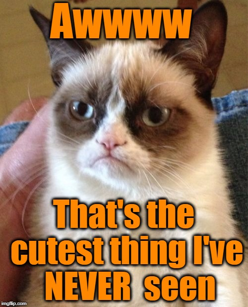 Grumpy Cat Meme | Awwww That's the cutest thing I've  NEVER  seen | image tagged in memes,grumpy cat | made w/ Imgflip meme maker