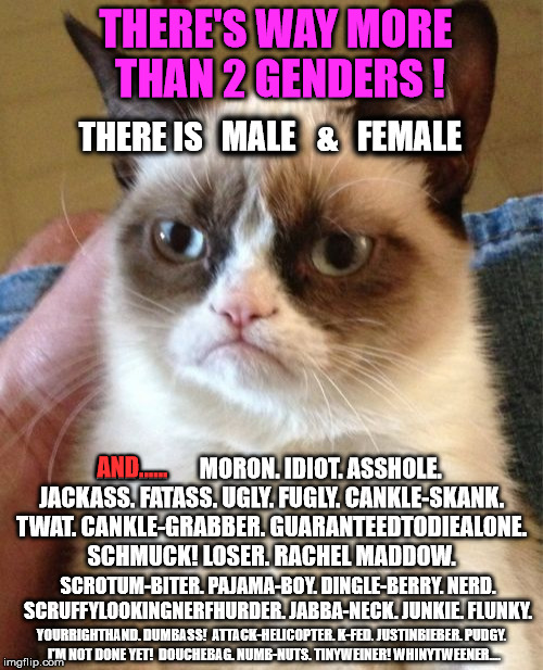 Grumpy Cat Meme | THERE'S WAY MORE THAN 2 GENDERS ! THERE IS   MALE   &   FEMALE AND......       MORON. IDIOT. ASSHOLE. JACKASS. FATASS. UGLY. FUGLY. CANKLE-S | image tagged in memes,grumpy cat,funny,gender,first world problems,political | made w/ Imgflip meme maker