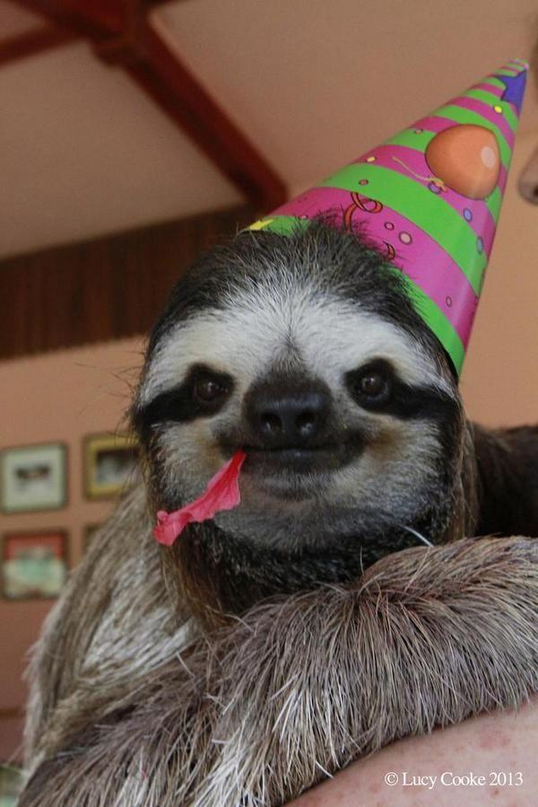 sloth birthday meme birthday sloth Blank Template   Imgflip sloth birthday meme