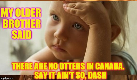 MY OLDER BROTHER SAID THERE ARE NO OTTERS IN CANADA.   SAY IT AIN'T SO, DASH | made w/ Imgflip meme maker