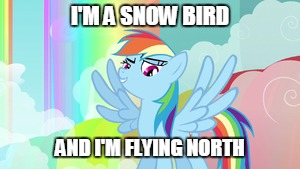 I'M A SNOW BIRD AND I'M FLYING NORTH | made w/ Imgflip meme maker