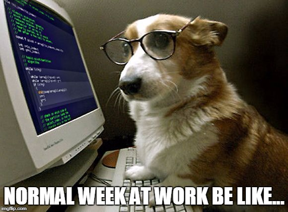 corgi hacker | NORMAL WEEK AT WORK BE LIKE... | image tagged in corgi hacker,corgi,hacking,computers | made w/ Imgflip meme maker