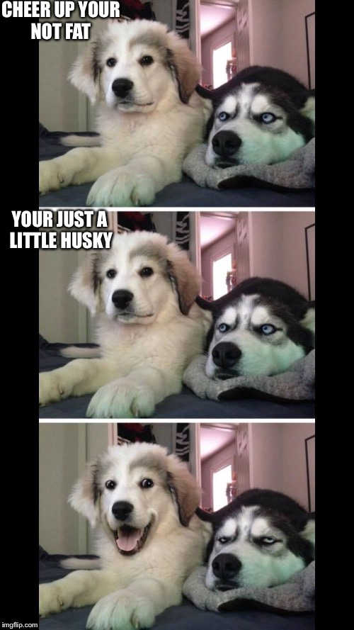 Bad pun very bad pun | CHEER UP YOUR NOT FAT YOUR JUST A LITTLE HUSKY | image tagged in bad pun very bad pun | made w/ Imgflip meme maker
