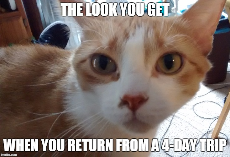 Vacation Over | THE LOOK YOU GET WHEN YOU RETURN FROM A 4-DAY TRIP | image tagged in cat,vacation | made w/ Imgflip meme maker