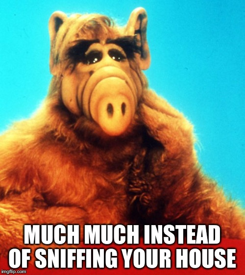 Much much  | MUCH MUCH INSTEAD OF SNIFFING YOUR HOUSE | image tagged in alf the alien,alf | made w/ Imgflip meme maker