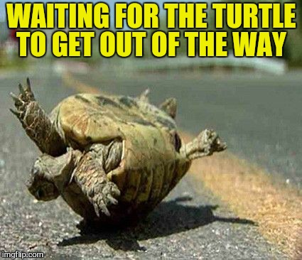 WAITING FOR THE TURTLE TO GET OUT OF THE WAY | made w/ Imgflip meme maker