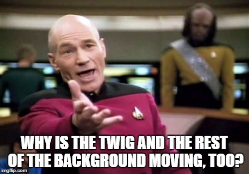 Picard Wtf Meme | WHY IS THE TWIG AND THE REST OF THE BACKGROUND MOVING, TOO? | image tagged in memes,picard wtf | made w/ Imgflip meme maker