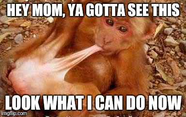 HEY MOM, YA GOTTA SEE THIS LOOK WHAT I CAN DO NOW | image tagged in monkey sex,sex,mom,masturbate | made w/ Imgflip meme maker