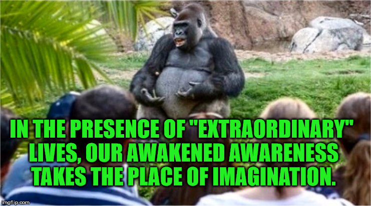 "Gorilla Glue | IN THE PRESENCE OF ""EXTRAORDINARY"" LIVES, OUR AWAKENED AWARENESS TAKES THE PLACE OF IMAGINATION. 