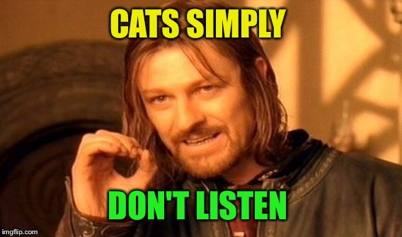 One Does Not Simply Meme | CATS SIMPLY DON'T LISTEN | image tagged in memes,one does not simply | made w/ Imgflip meme maker