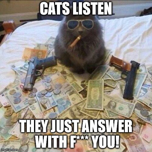 CATS LISTEN THEY JUST ANSWER WITH F*** YOU! | made w/ Imgflip meme maker
