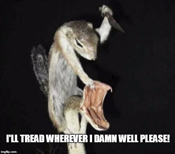Don't tell me where to tread! | I'LL TREAD WHEREVER I DAMN WELL PLEASE! | image tagged in liberty,anarchy,american revolution,freedom,snake | made w/ Imgflip meme maker
