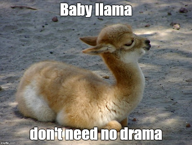Baby llama don't need no drama | made w/ Imgflip meme maker