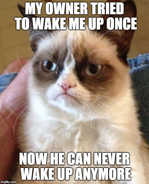 No one can disturb my sleep | MY OWNER TRIED TO WAKE ME UP ONCE NOW HE CAN NEVER WAKE UP ANYMORE | image tagged in memes,grumpy cat | made w/ Imgflip meme maker