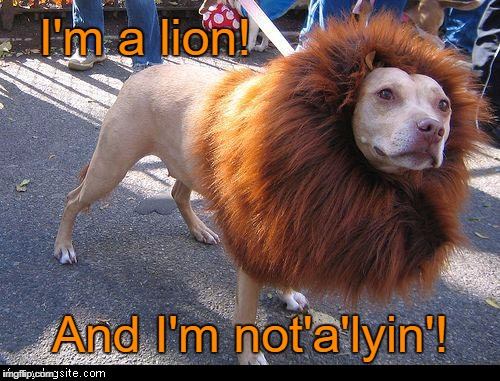 Seems Legit  | I'm a lion! And I'm not'a'lyin'! | image tagged in lion dog,memes,dog,seems legit | made w/ Imgflip meme maker