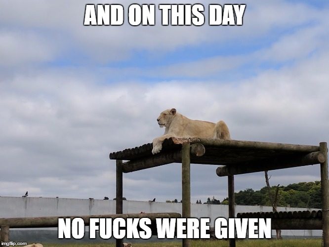 AND ON THIS DAY NO F**KS WERE GIVEN | image tagged in no fcks | made w/ Imgflip meme maker