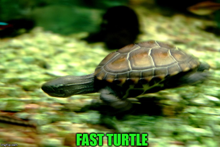 FAST TURTLE | made w/ Imgflip meme maker