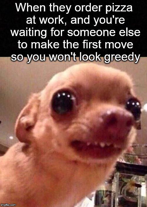 Nobody wants to be first.... | When they order pizza at work, and you're waiting for someone else to make the first move so you won't look greedy | image tagged in funny memes,pizza,greedy,office,job,dog | made w/ Imgflip meme maker