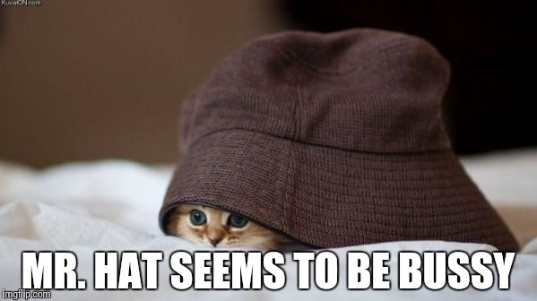 Hat Problems | MR. HAT SEEMS TO BE BUSSY | image tagged in memes,funny,cat,problems | made w/ Imgflip meme maker