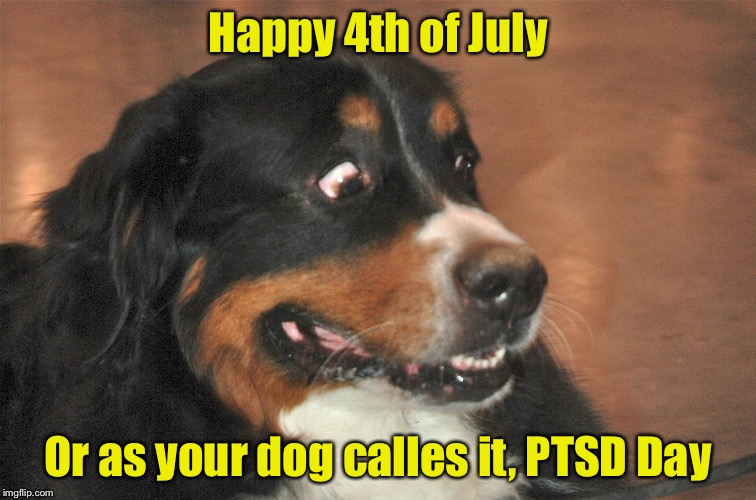 Remember to keep your pets inside this weekend | Happy 4th of July Or as your dog calles it, PTSD Day | image tagged in memes,fourth of july,ptsd | made w/ Imgflip meme maker