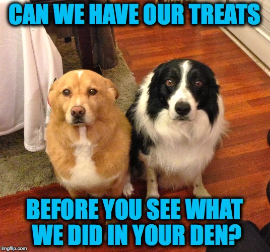 Sooooo Guilty (lol) | CAN WE HAVE OUR TREATS BEFORE YOU SEE WHAT WE DID IN YOUR DEN? | image tagged in besties | made w/ Imgflip meme maker
