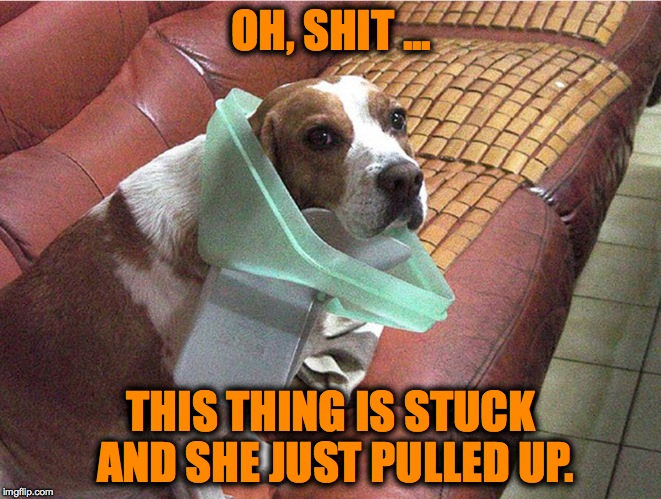 Soooo Guilty Part Two | OH, SHIT ... THIS THING IS STUCK AND SHE JUST PULLED UP. | image tagged in doggo garbage can lid | made w/ Imgflip meme maker
