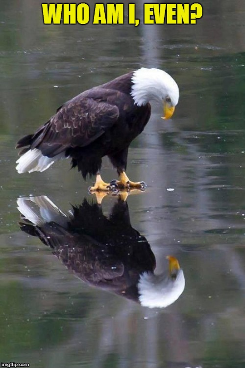 Staring at your reflection, pondering from deep within.  | WHO AM I, EVEN? | image tagged in memes,eagle,reflection,pondering,deep thought,bald eagle | made w/ Imgflip meme maker