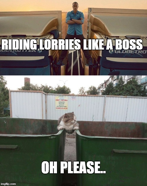RIDING LORRIES LIKE A BOSS OH PLEASE.. | image tagged in like a boss,jean-claude van damme,cats | made w/ Imgflip meme maker