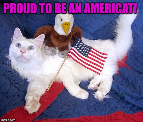#Thankful  | PROUD TO BE AN AMERICAT! | image tagged in lynch1979,independence day,memes,funny cat memes | made w/ Imgflip meme maker