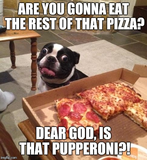 Hungry Pizza Dog | ARE YOU GONNA EAT THE REST OF THAT PIZZA? DEAR GOD, IS THAT PUPPERONI?! | image tagged in hungry pizza dog | made w/ Imgflip meme maker