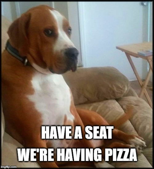 HAVE A SEAT WE'RE HAVING PIZZA | image tagged in dog,dog meme,pizza,pizza night,have a seat | made w/ Imgflip meme maker