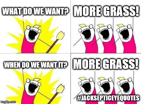 What Do We Want Meme | WHAT DO WE WANT? MORE GRASS! WHEN DO WE WANT IT? MORE GRASS! #JACKSEPTICEYEQUOTES | image tagged in memes,what do we want | made w/ Imgflip meme maker